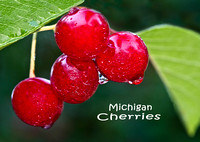 Michigan Cherries Photo Magnet - Horizontal